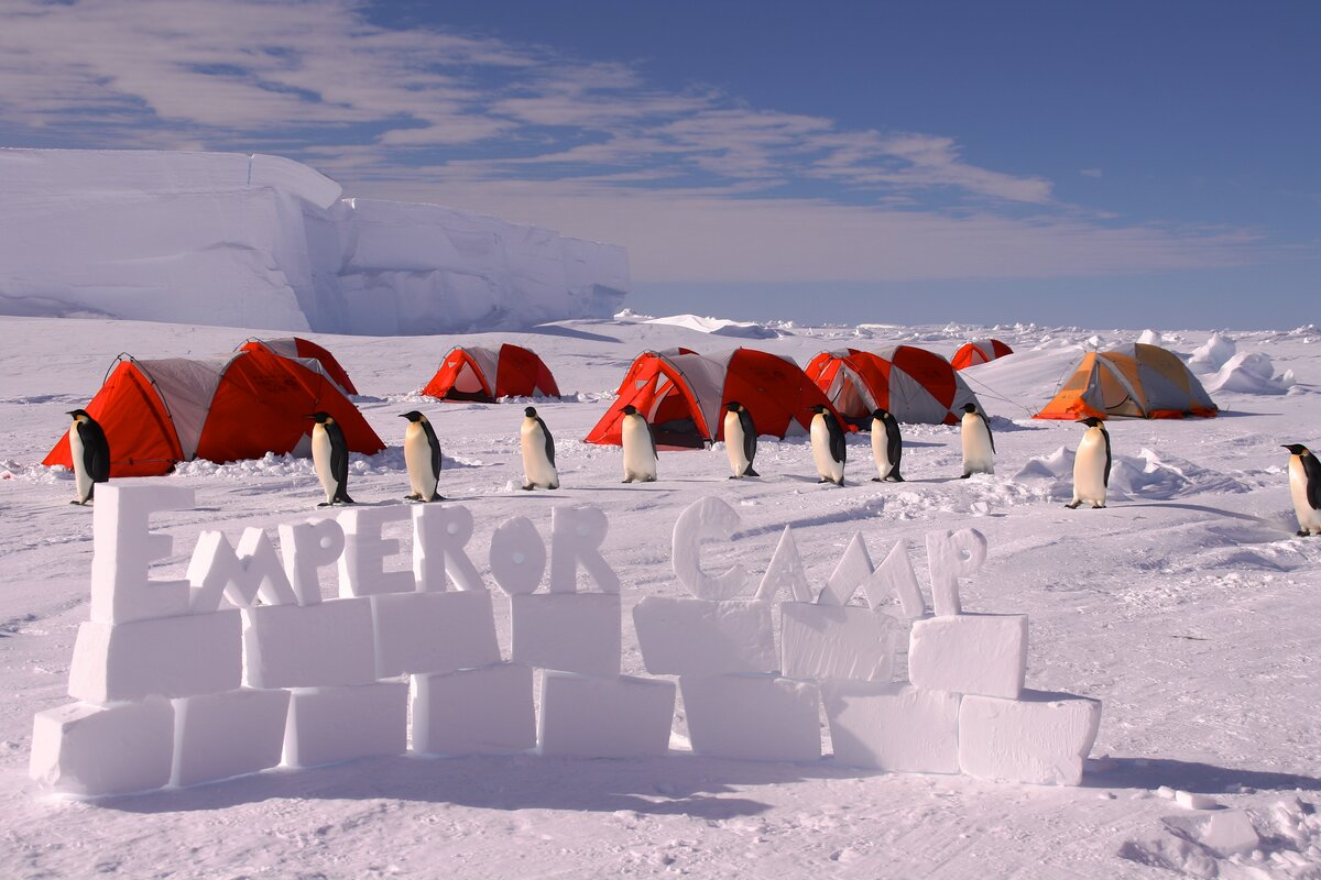 Emperor penguins come to inspect ALE's camp