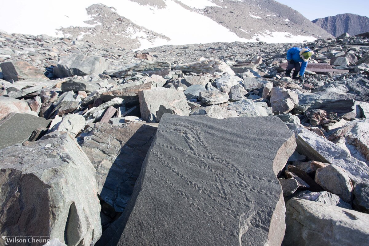 Ichnofossils (trace fossils) found at Union Glacier