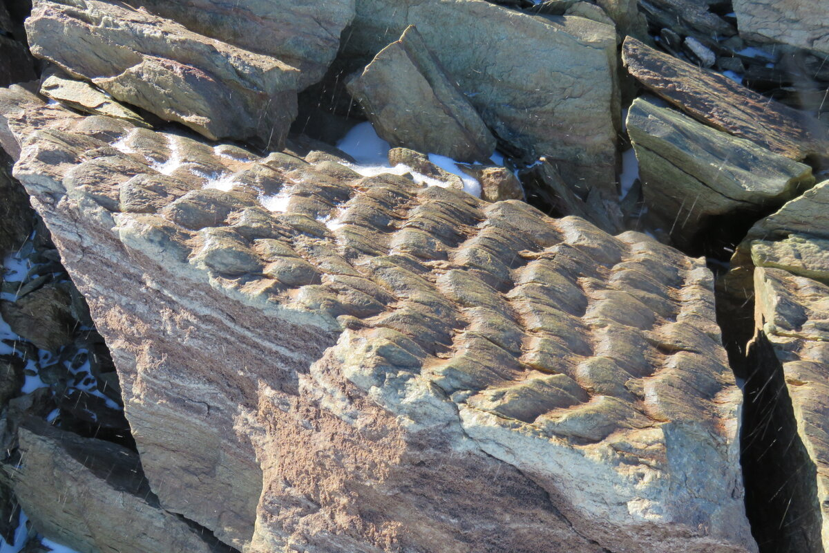 Fossilized ripples from an ancient sea bed