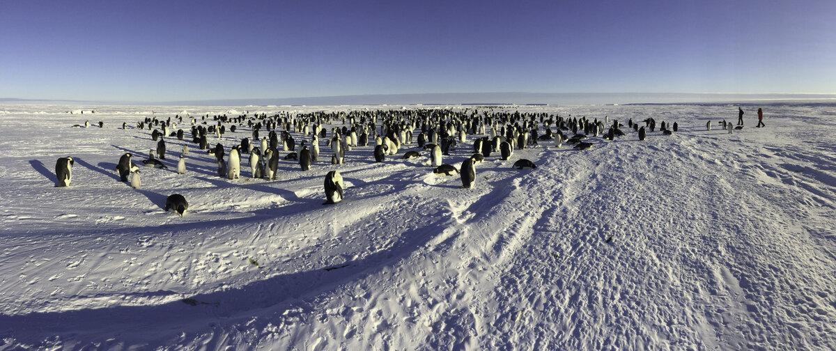 Emperor penguin colony at Gould Bay