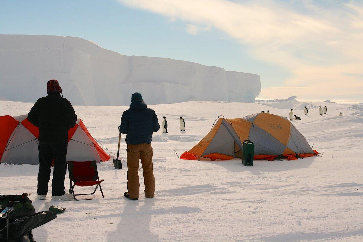 A parade of emperor penguins passes through camp