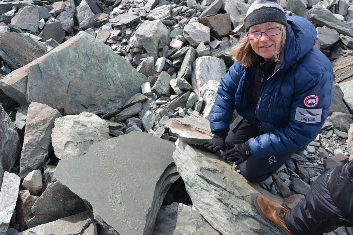 Examining fossilized, trilobite tracks